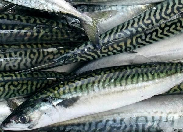 Pesci molluschi e crostacei libero ricercatore for Pesce rosso razza
