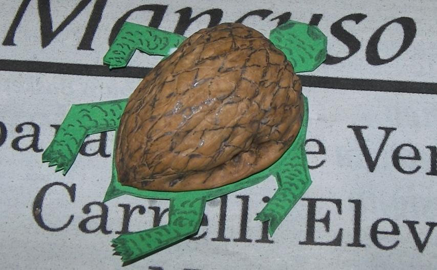 """""""Dettaglio tartaruga giocattolo"""""""