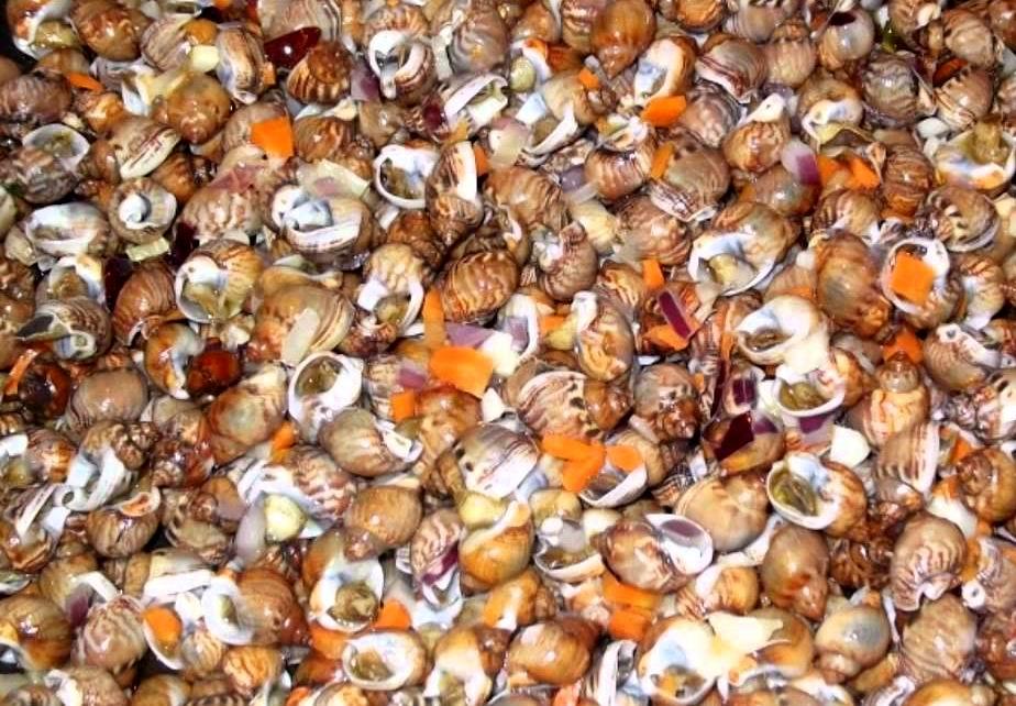 'o maruzziello (torricella comune)