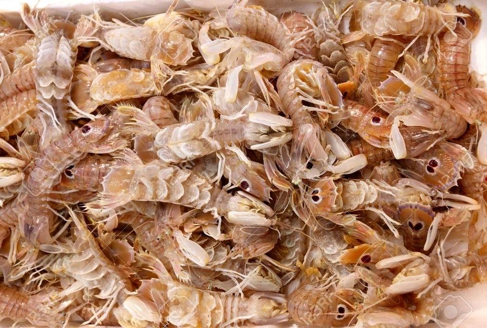 'a spernocchia (pannocchia - squilla mantis)