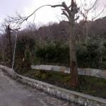 Il tiglio di via Pantanella capitozzato (Mi chiedo perché è stato risparmiato quell'unico ramo?).
