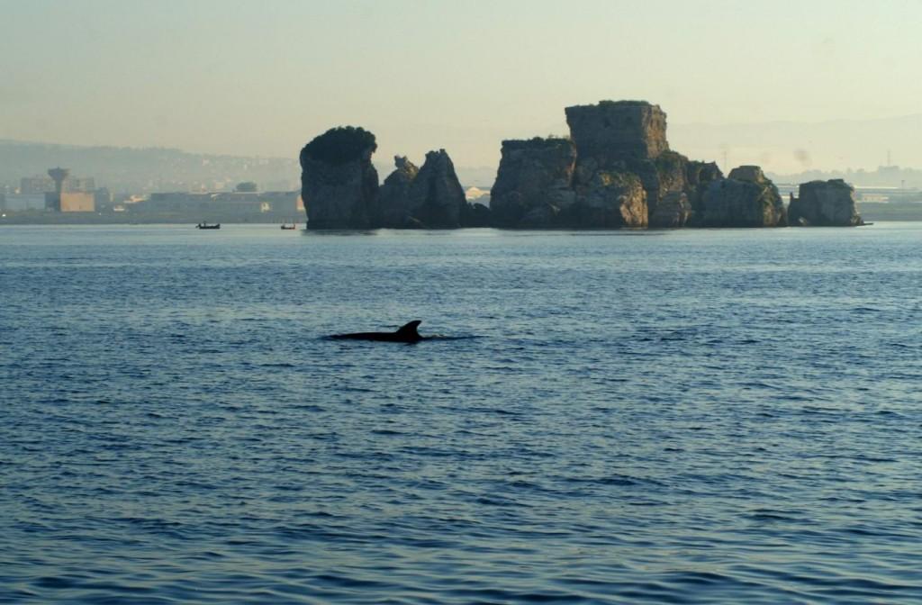 Delfino a Rovigliano (foto Giuseppe Plaitano)