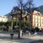 I lecci in villa comunale (foto Ferdinando Fontanella).
