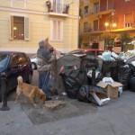 """I platani della """"Basilio Cecchi"""" tutti nella munnezza!!!"""
