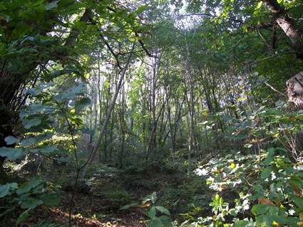 Castellammare di Stabia: il bosco misto (foto Fontanella).