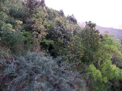 Castellammare di Stabia: la macchia mediterranea (foto Fontanella).