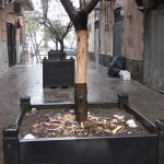 Albericidio di un olivo a Castellammare