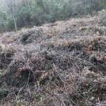 Taglio indiscriminato del bosco ceduo.