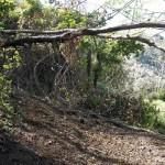 Sentiero ostruito da albero morto.