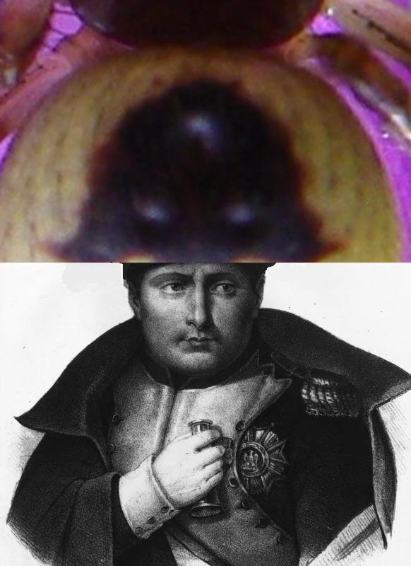 Napoleone Bonaparte e il suo celebre cappello.
