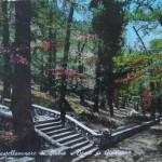 Il Parco di Quisisana