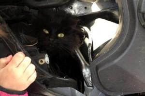 La gatta nel motore