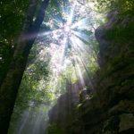 Estate 2016: il sole tra le chiome dei faggi del Monte Faito