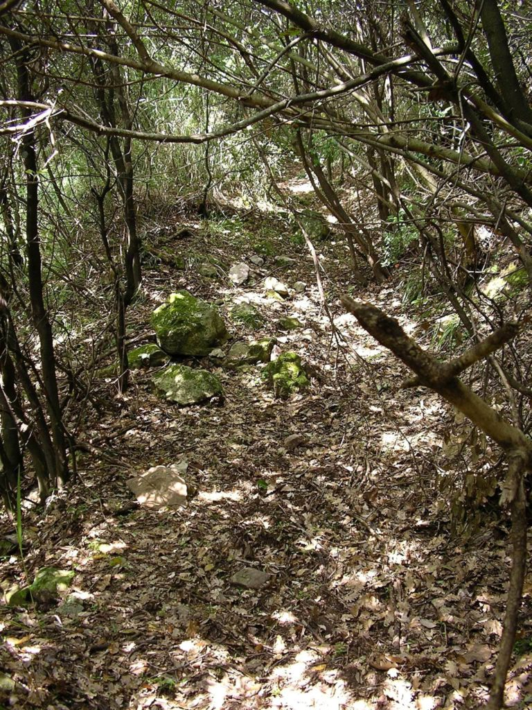 Il percorso boschivo (foto Maurizio Cuomo)