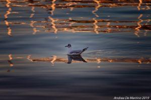 Pescatore volante (foto Andrea De Martino)