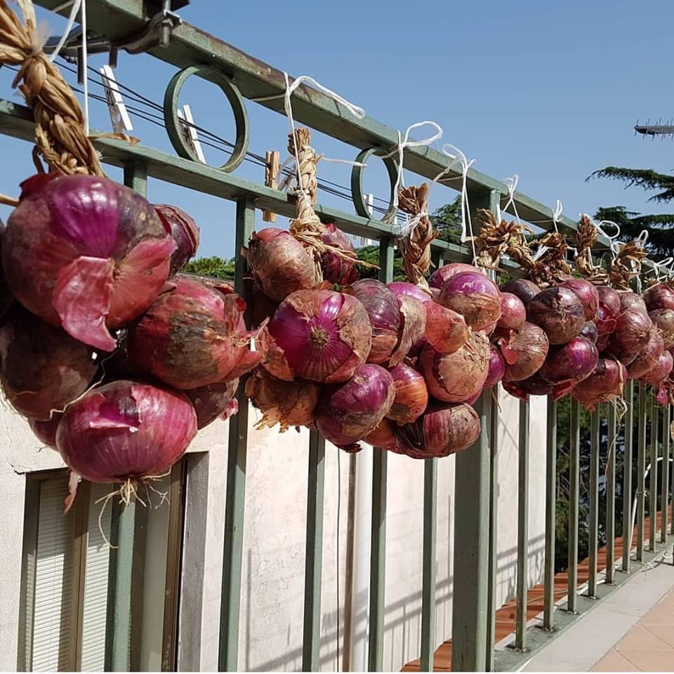 Cipolle stabiesi (foto Nando Fontanella)
