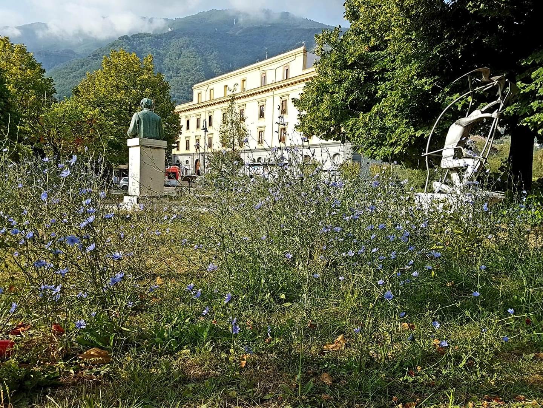 La cicoria è fiorita nelle aiuole della Villa comunale... il verde pubblico così come lo intendiamo a Castellammare di Stabia
