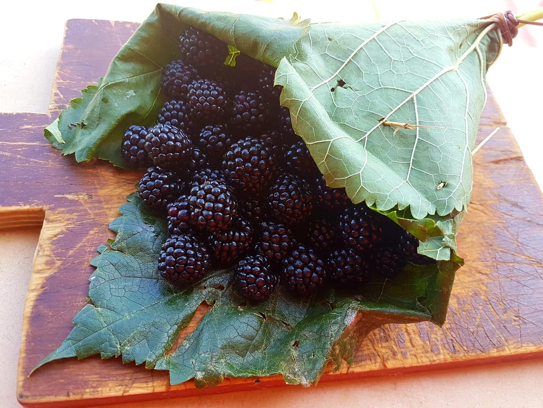 """More di rovo in """"cuoppo"""" di foglie di gelso. Gusto e creatività, sapori e colori della terra di Stabia"""
