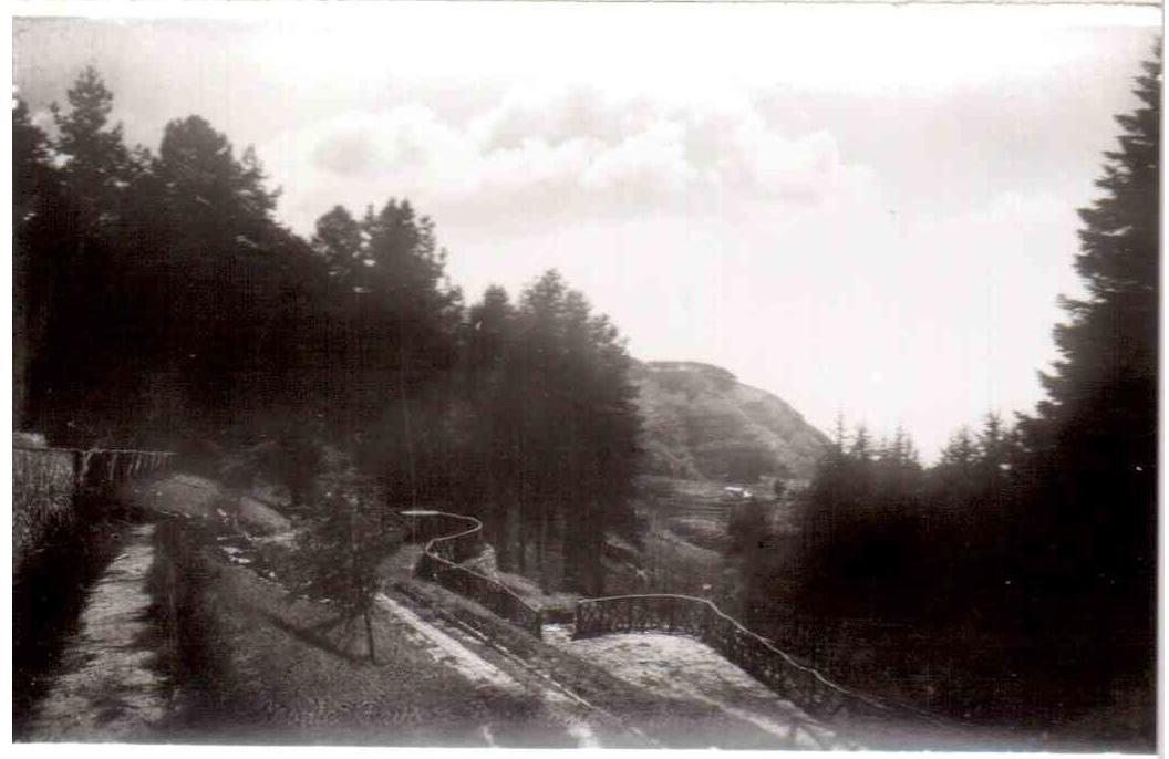 Pineta - Monte Faito